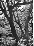 Bundesarchiv Bild 135-KA-03-025, Tibetexpedition, Wald