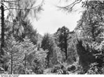 Bundesarchiv Bild 135-KA-05-064, Tibetexpedition, Krüppelzone