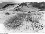 Bundesarchiv Bild 135-KB-07-023, Tibetexpedition, Sanddüne