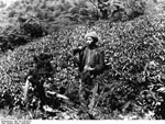 Bundesarchiv Bild 135-S-05-06-23, Tibetexpedition, Tibeter, Rhododendron