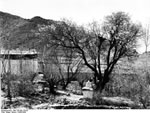 Bundesarchiv Bild 135-BB-176-05, Tibetexpedition, Park Mit Aprikosenbaum