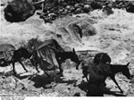 Bundesarchiv Bild 135-S-02-13-03, Tibetexpedition, Karawane, Lasttiere