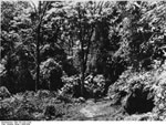 Bundesarchiv Bild 135-S-02-13-09, Tibetexpedition, Wald