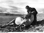 Bundesarchiv Bild 135-S-05-01-23, Tibetexpedition, Wienert Mit Wildpferd
