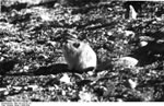 Bundesarchiv Bild 135-S-07-01-14, Tibetexpedition, Maushase