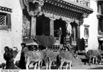 Bundesarchiv Bild 135-S-12-35-15, Tibetexpedition, Esel Vor Kalon-Lama-Haus