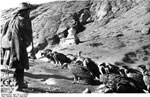 Bundesarchiv Bild 135-S-12-50-06, Tibetexpedition, Ragyapa, Geier
